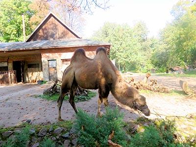 גן החיות בקובנה