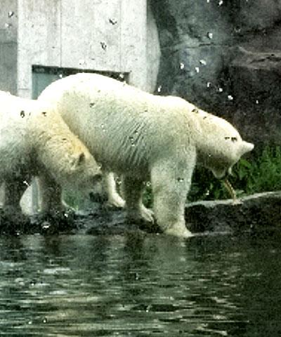 גן החיות בשנברון